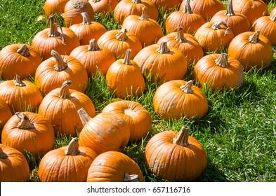 Pumpkin Patch in a Farmer Market