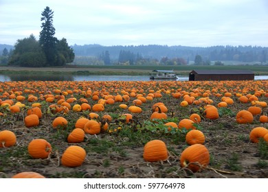 Pumpkin patch with lake and boat in the background at Lakeview Farm near Portland Oregon