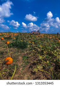 Pumpkin patch landscape