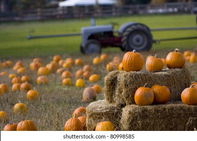 Pumpkin patch on a farm in Oregon