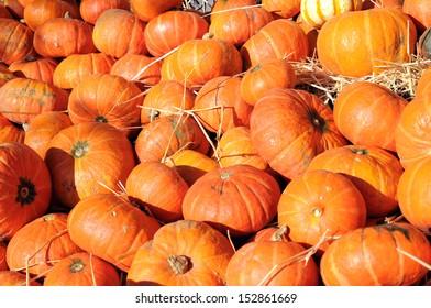 pumpkin patch under sunshine