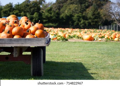Pumpkin patch and wagon