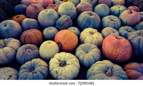 Pumpkin season in the fall