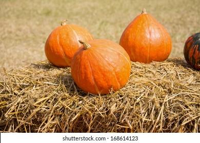 pumpkin shanks giving background health harvest food
