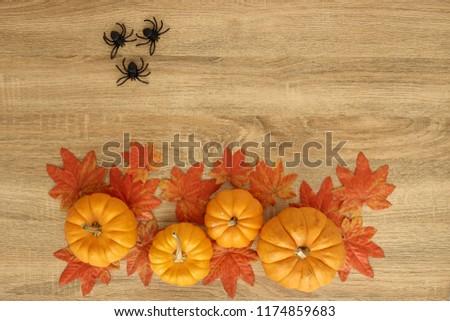 Pumpkin With Spider Autumn