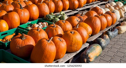 Pumpkin, squash, marrow, courgette and other vegetables on the farm market in autumn - Cucurbita Five pepo are grown worldwide for their edible fruit, variously known as squash, pumpkin or gourd.