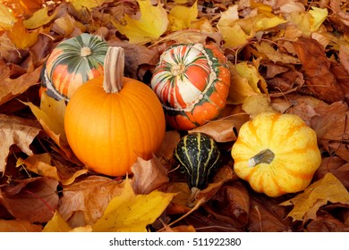 Pumpkin, squashes and gourds in different colours, on dry fall foliage