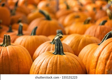 Pumpkin Stalks