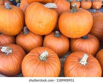 Pumpkin Stalks on display at supermarket.