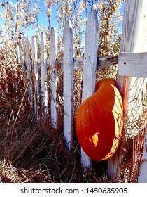 Pumpkin stuck in picket fence