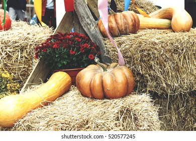 Pumpkin, Thanksgiving Day. Colorful autumn decorations of pumpkins on straw with colorful ribbons