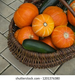 Pumpkin and zucchini in wicker basket. Harvest and autumn concept