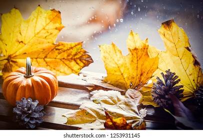 Pumpking and maple leaves near rainy window. Autumn season concept