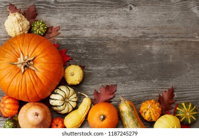 Pumpkins from above