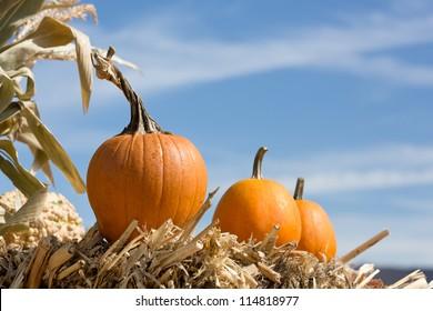 pumpkins against blue sky