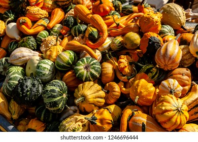 Pumpkins in all shapes and colors