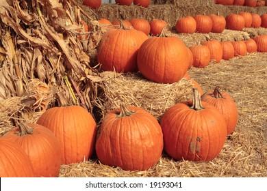 Pumpkins in Autumn.