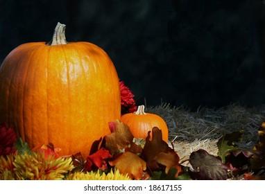 Pumpkins in Autumn Background