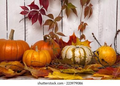 Pumpkins with Autumn Foliage