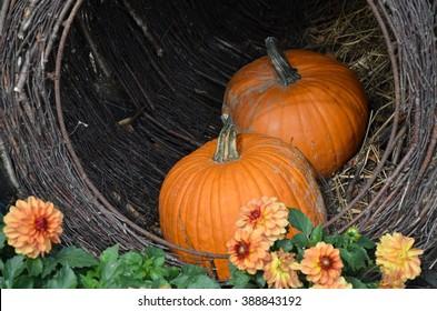 Pumpkins in basket with flowers