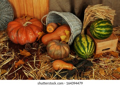 Pumpkins in basket and watermelons on crate on straw on sackcloth background