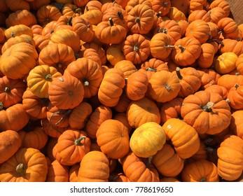Pumpkins in a box