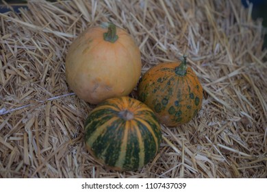 Pumpkins collection on hay. Autumn harvest. Fall decorations, autumn celebration, postcard and poster background. Autumn vegetables outdoor.