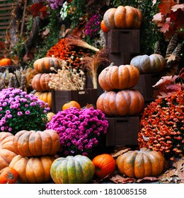 Pumpkins, decor for the halloween and thanksgiving, autumn season