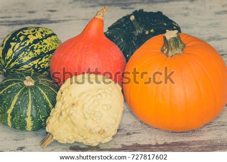 Pumpkins Different Typesgood Eat Decorative Stock Photo Edit Now