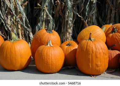 Pumpkins with dry corn plants on the background