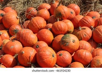 pumpkins, fall, autumn, orange, farm, pumpkin patch, autumn harvest, halloween icons, pumpkin stand, stalks, fruit