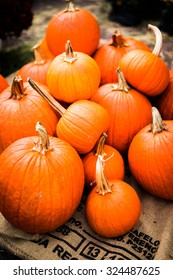 Pumpkins at the farm