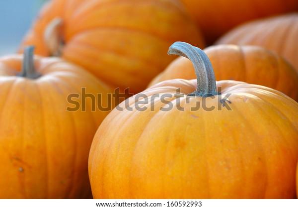 pumpkins at farm for halloween