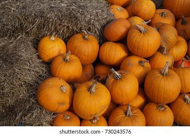 Pumpkins at the Farmers Market