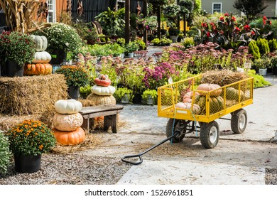 Pumpkins at the farmers market during the Halloween Holidays, USA