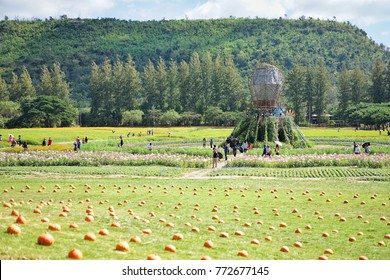 Pumpkins in the field and Cosmos flower field that is the highlight of farm tour at Jim Thompson Farm, Nakornratchasima, Thailand on 3 December 2017