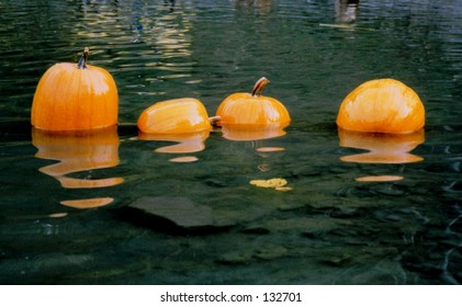 Pumpkins floating in a pond