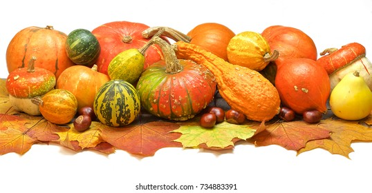 pumpkins and fruits lie on maple leaves. white background. color photo.