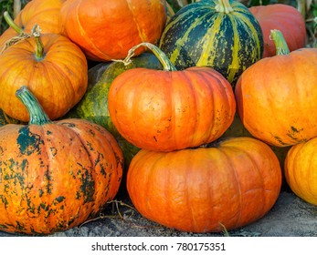 Pumpkins gathered together in the vegetable garden.
