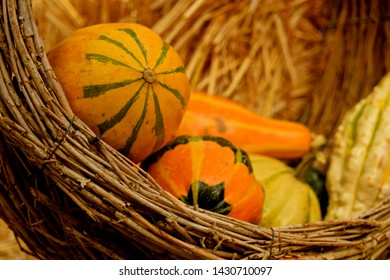 Pumpkins and gourds are Autumn season harvest. Best for Fall decoration and Halloween.