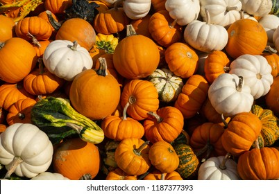 Pumpkins and gourds at Lancaster County farm stand waiting to be picked for Halloween or Thanksgiving holiday decorations.