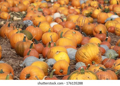 Pumpkins and gourds on the ground