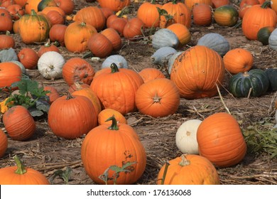 Pumpkins and gourds on ground