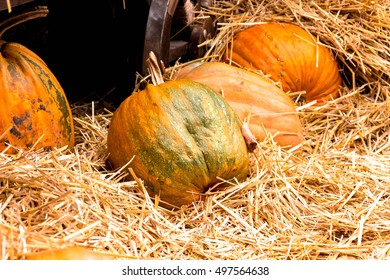 Pumpkins in hay. Autumn pumpkins in hay.