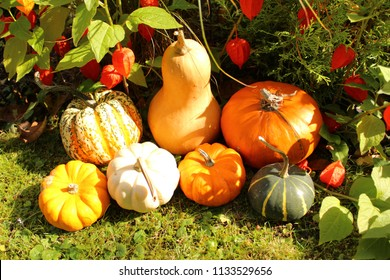 pumpkins and lampion flowers