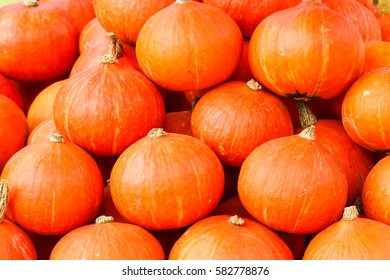 Pumpkins lined up to use as a background.