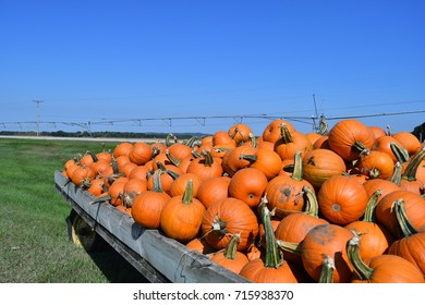 Pumpkins loaded on a wagon under a blue sky, horizontal, with field in the background