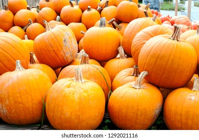 Pumpkins next to each other forming a background