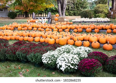 Pumpkins in a nursery ready for sale