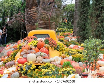 Pumpkins on display in a replica pickup in hothouse or hot house in Singapore